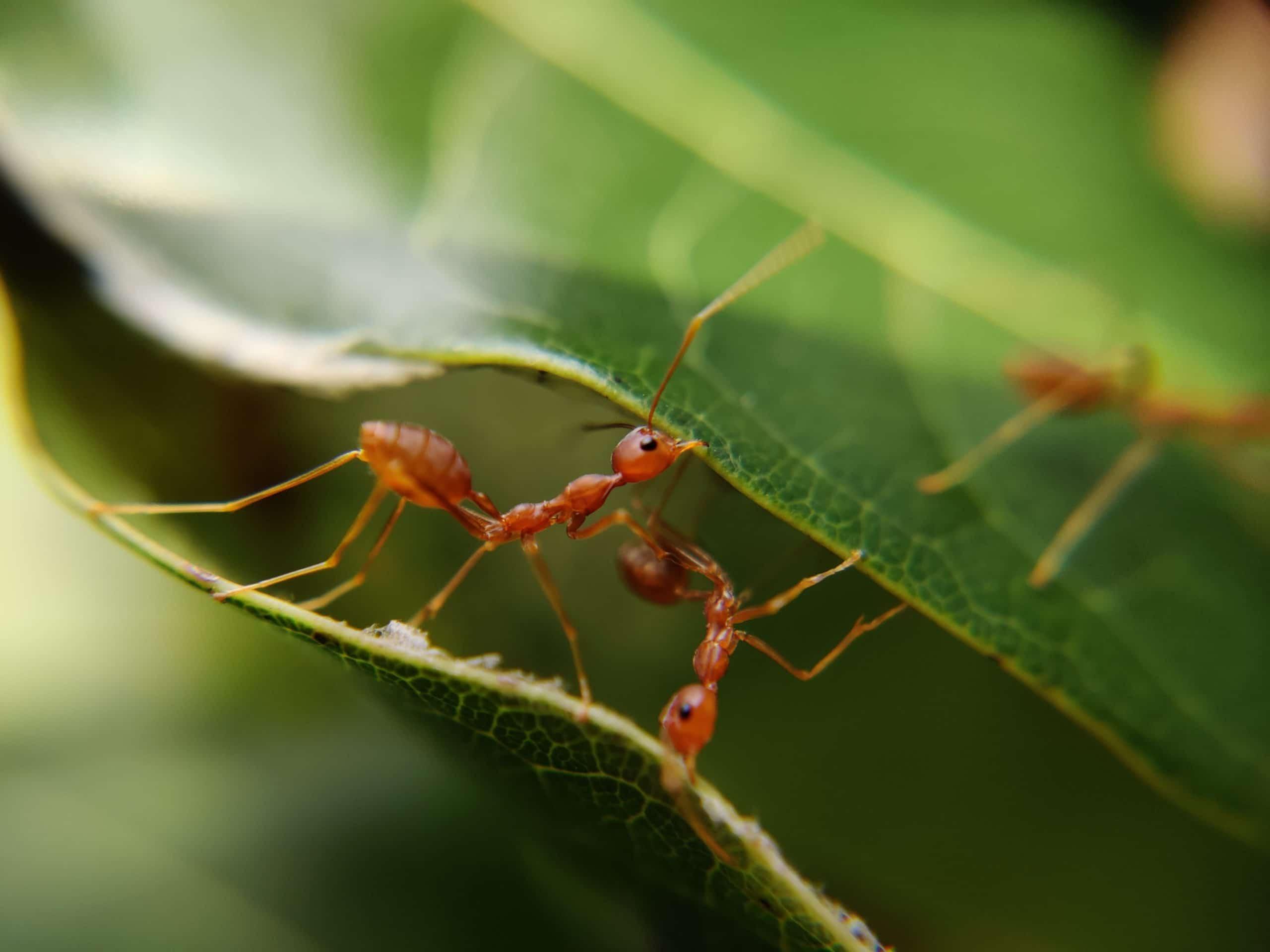 La cigale et la fourmi déconfinement